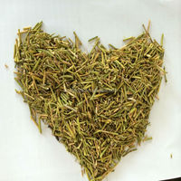 Ma huang cao herb medicine CHINESE EPHEDRA
