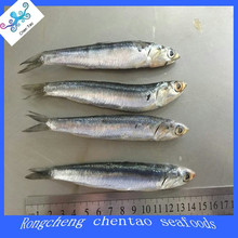 frozen fresh high quality anchovy