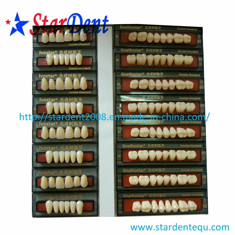 Ivoclar Vivadent Three Layer Synthetic Resin Teeth (28pcs)