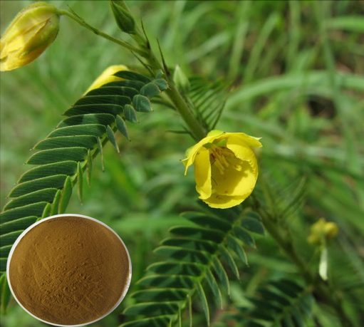 Nomame Semaherb extract of Flavanol/Cassia nomame P.E