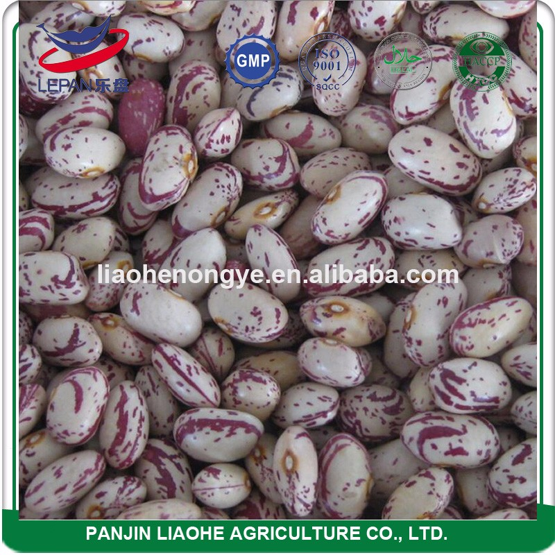 Top Popular America Round Light Speckled Beans Types of Kidney Beans