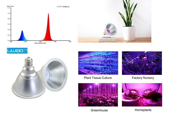par30 12W cob led grow light hydroponic