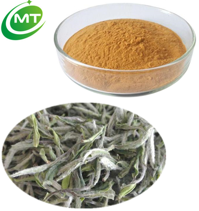 100% pure natural water soluble organic antibacterial White Tea Extract