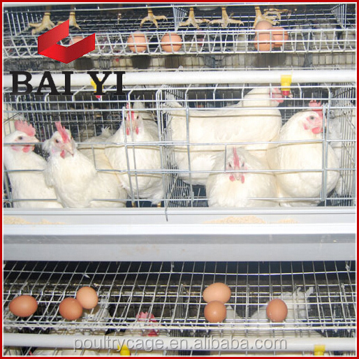 Design Industrial Poultry Farming Equipment For Chickens With Ventilation Fan For Poultry Farming