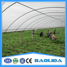 Polythene Film Covered Vegetable Tunnel Greenhouse For Sale