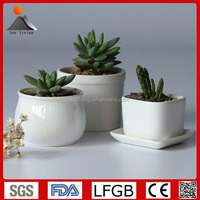 White ceramic mini succulents and flower planter pots for home decor