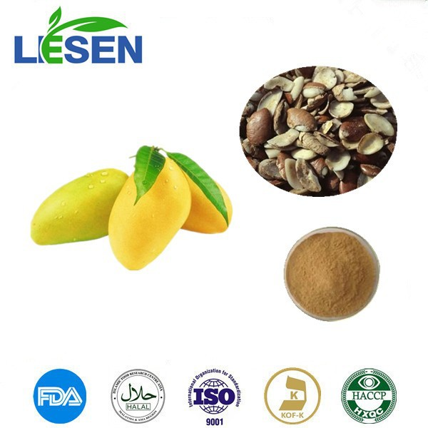 Natural Wild African Mango Seed Extract 10:1