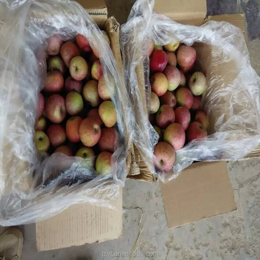 Supply cheapest Chinese China fresh 198 qinguan apple to india nigeria