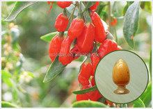 Super quality new coming goji berry extract power