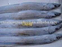 Aquatic Food Ribbon fish