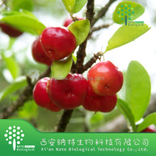 Acerola Cherry Powder Extract VitaminC 17% powder VitaminC 25% Hplc