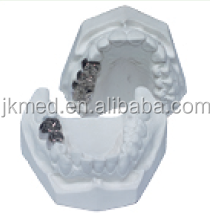 dental baistra medical teeth jaw model