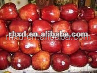 Hua niu apples /wholesale /distributor apples in China