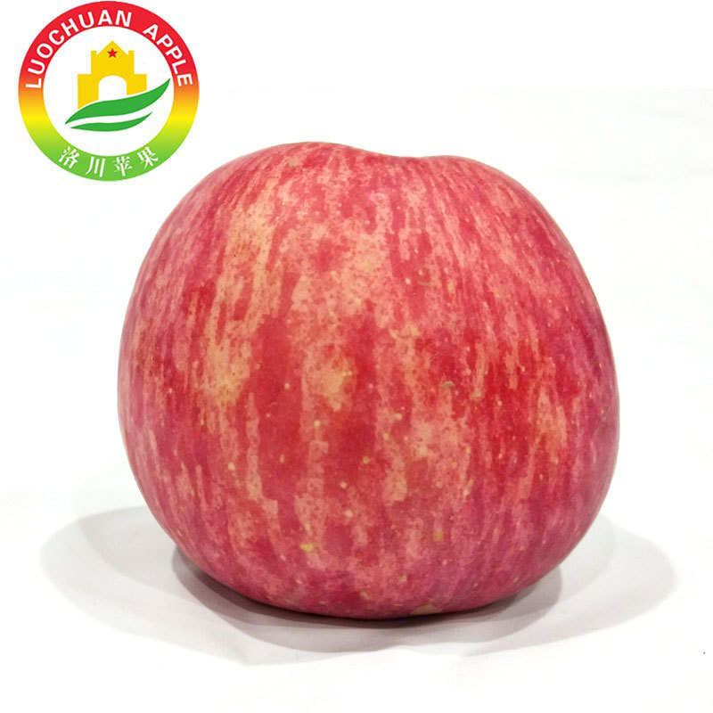 Best Price Great Quality China Red Fresh Fuji Apple fruit for fresh fruit importers