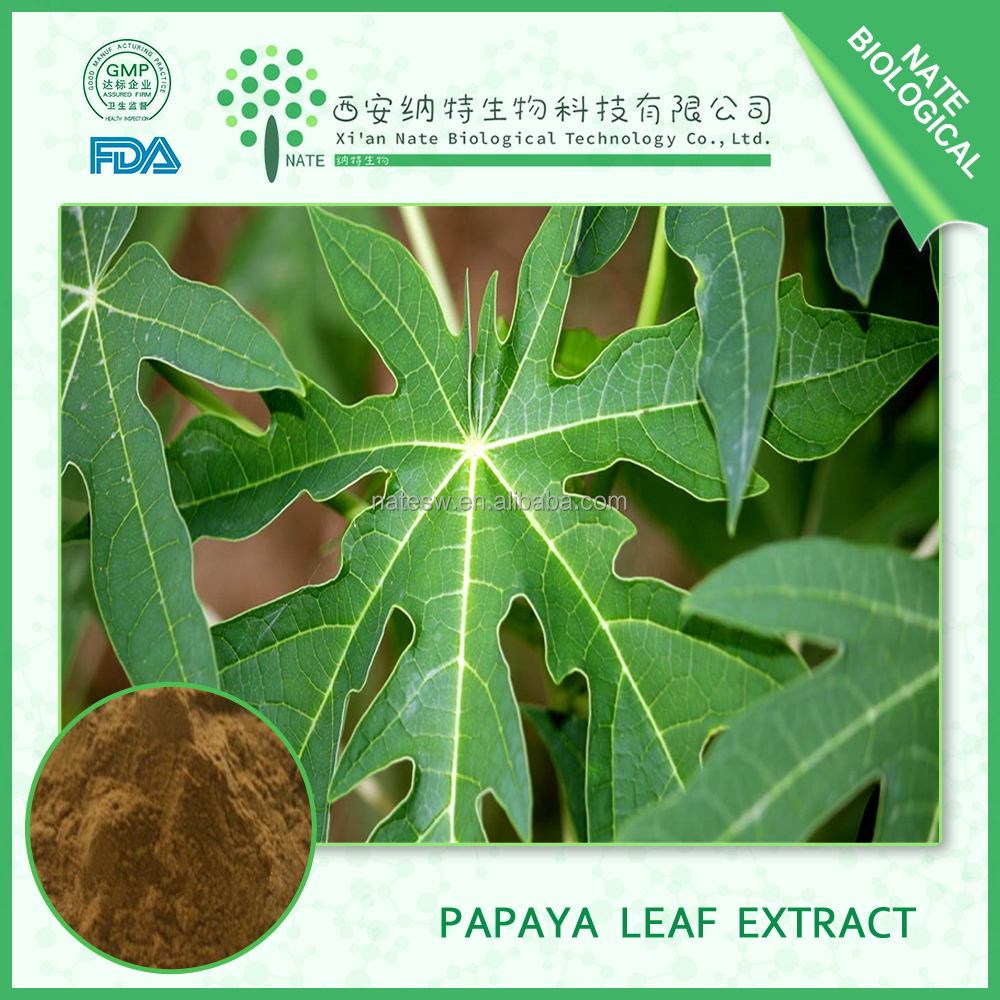 Best quality 100% natural papaya leaf extract 10:1 Papaya Powder