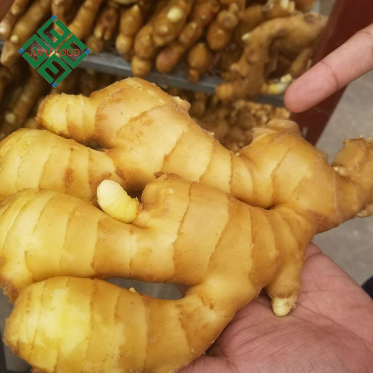 china ginger market price for fresh ginger