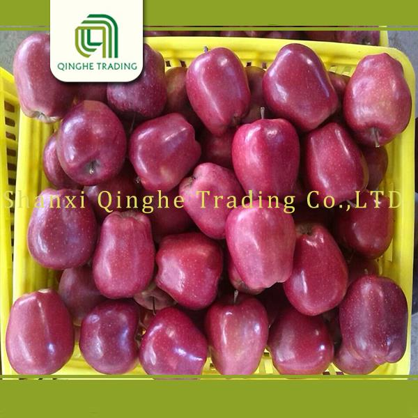Hot selling red appe 75-80mm huaniu apple market prices fruits