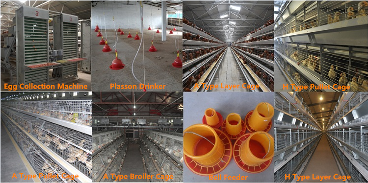 A Type Full Automation Poultry Chicken Cage Commercial Breeding Cage
