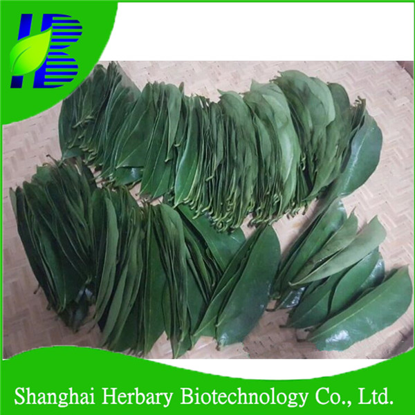 Professional soursop palnting base direclty supply soursop leaves for sale