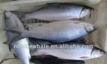500-800g 800g up 800g+ MILK FISH WHOLE ROUND