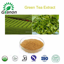 100% Tea polyphenol and Theanine Green tea extract