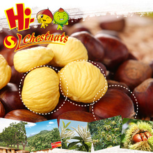 2015 Best fresh wholesale chestnut
