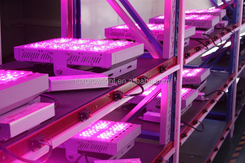 Waterproof Meanwell Driver COB Serise 200W LED Grow Light with Full Spectrum 5 Years