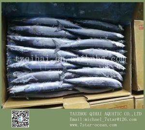 New Comming Fresh Frozen Pacific Saury For Russia Market 10kg #1