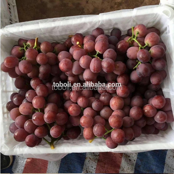 high quality new fruits fresh grapes price