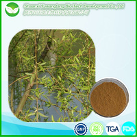 Anti-rheumatism factory price high quality Willow Bark Extract/White Willow Bark Extract
