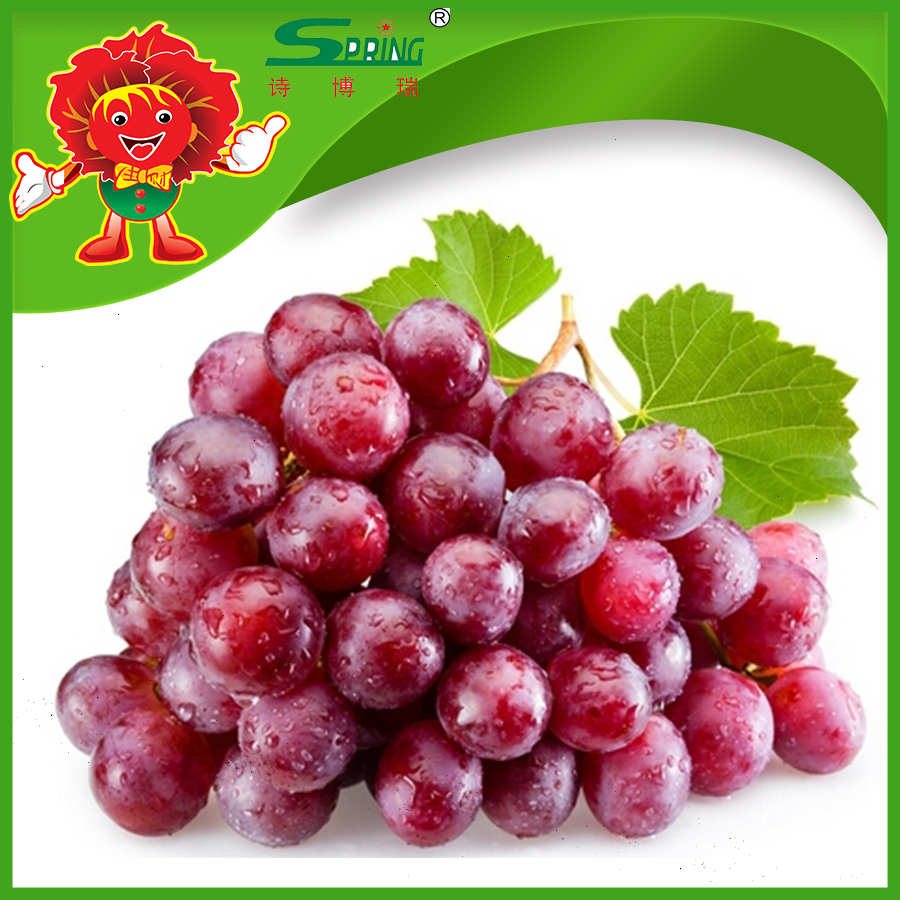 Top quality seedless red grapes for Dubai Market