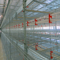 Full automatic poultry equipment for layer chicken breeding
