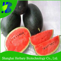2017 Black skin watermelon seeds for growing