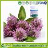 Trifolium pratense L extract /Trifolium Extract/Red Clover Extract