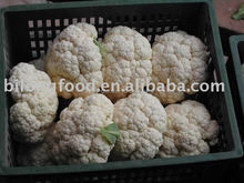 2017 new crop chinese fresh cauliflower (chinese)