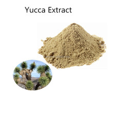 Best Price 100% nature yucca schidigera powder extract