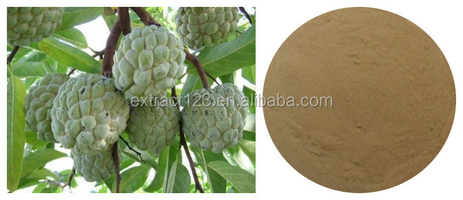 Manufacturer Supply Guanabana, Graviola Extract