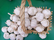 the most popular organic garlic for good health