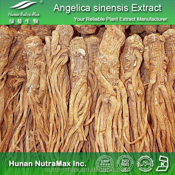 Plant Extract Angelica P.E./Angelica Powder Extract/Angelica Extract