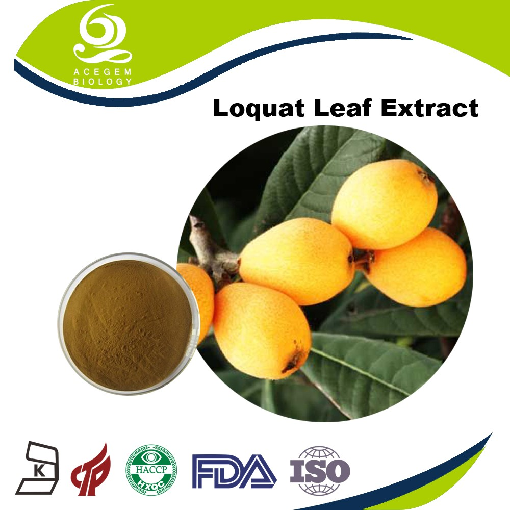 Free Samples Loquat Leaf Extract Manufacturer