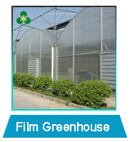 Winter insulation and summer cooling galvanized tube plastic low cost agricultural greenhouse