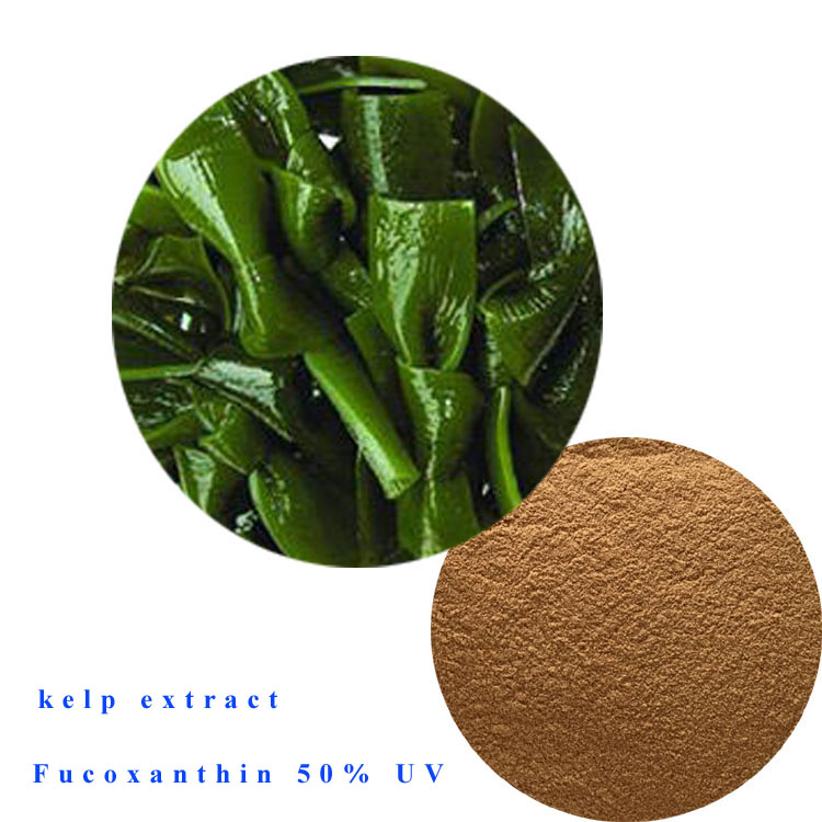 High Quality kelp extract fucoxanthin 50% UV
