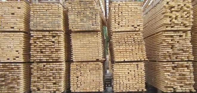 Birch sawn timber