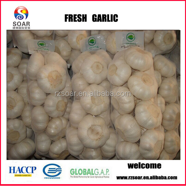 2014 Natural fresh garlic