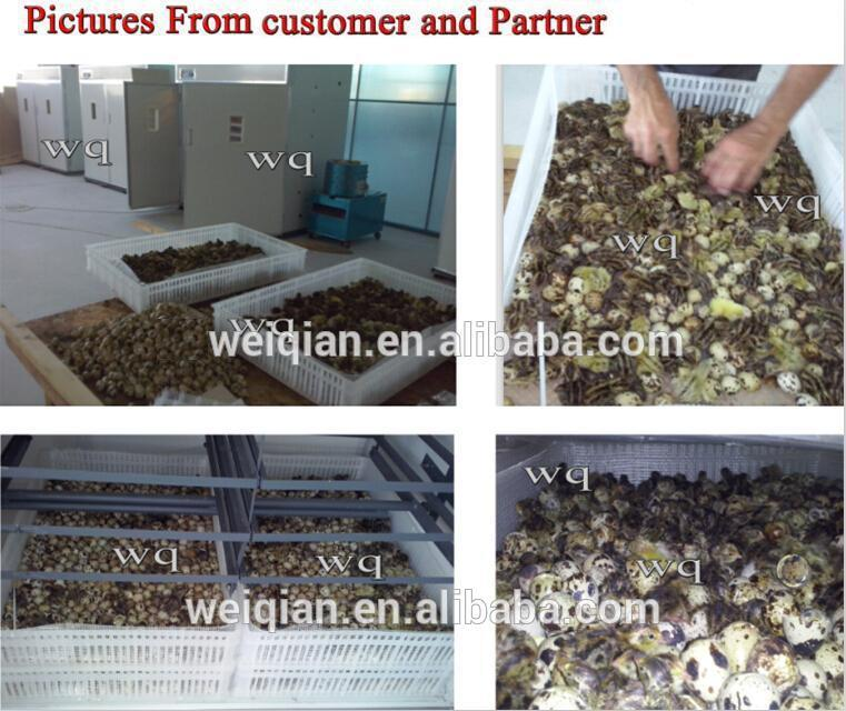 Incubadora automática e nascedouro / ovo incubadora incubadora / frango aves equipamentos agrícolas