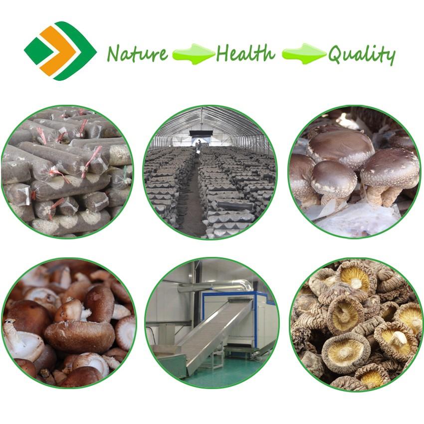 Nanyang Shiitake Dried Morel Mushrooms For Sale