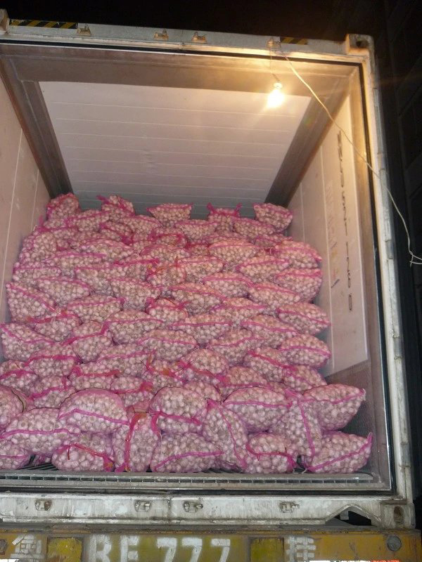 2016 crop Fresh China Garlic Low Price - Export to Ukraine Market