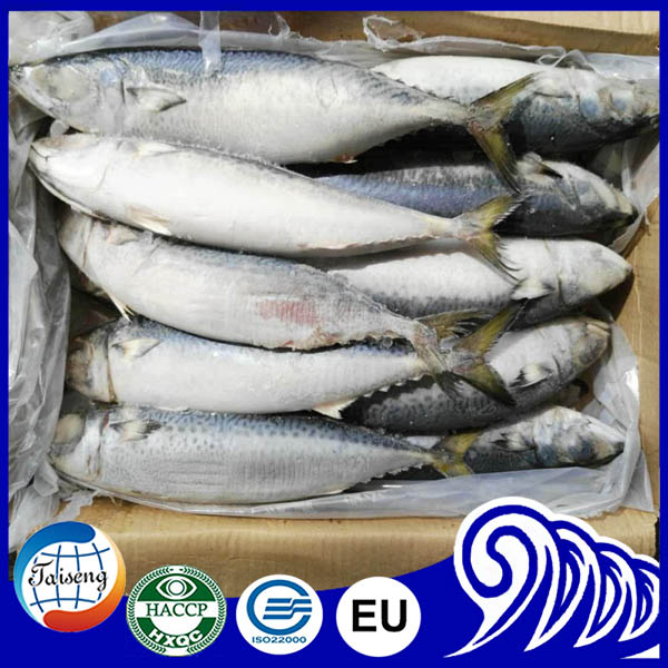 Cheap Frozen Fresh Ocean Seafoods Pacific Mackerel Wholesale Food Prices