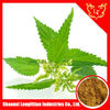 /product-gs/100-natural-45-beta-sitosterol-brown-powder-sting-nettle-extract-60297572659.html