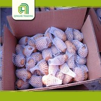 fresh russet potato seed holland potato